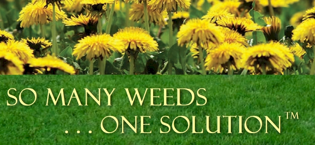 So many weeds banner